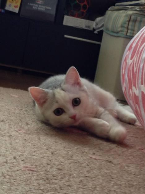猫飼い方しつけ粗相 子猫がトイレ以外での粗相 ネコジルシ