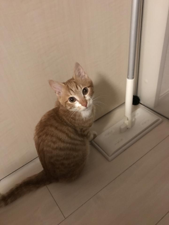茶トラ5ヶ月♂のしつけの飼い方について… - 神威詩音さんの猫ブログ - ネコジルシ