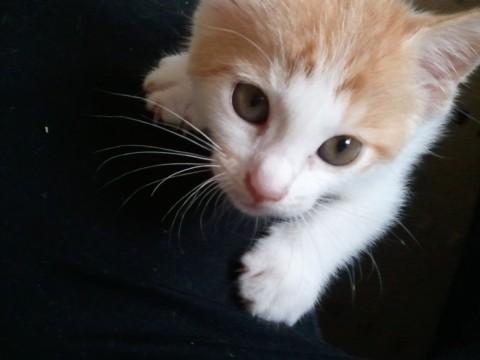 おいしそうな脚の女子校生 247脚目猫ガイジ隔離スレ [無断転載禁止]©bbspink.comYouTube動画>1本 ->画像>3138枚