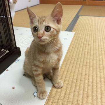 里親 猫 石川 県 石川県の犬の里親募集 ジモティー
