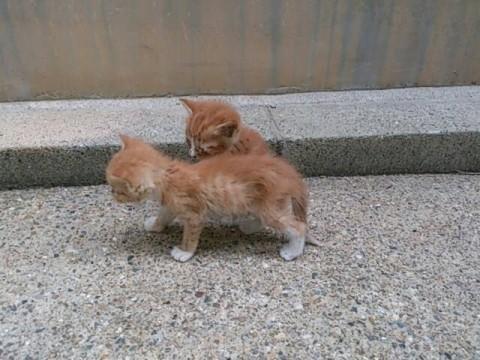 子猫 生まれ たばかり の