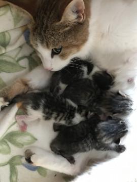 子猫 里親 生まれ たばかり の