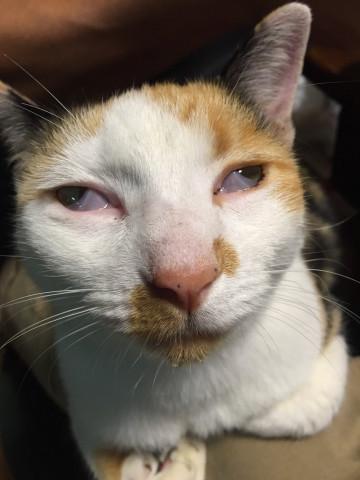 猫画像どっと猫ブログ - 可愛い猫の ...