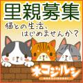 ネコジルシ猫の里親募集のページ