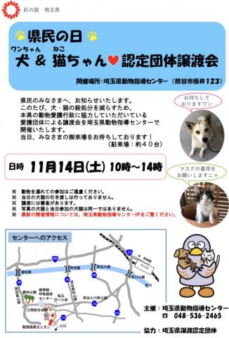 会 埼玉 犬 譲渡 保護