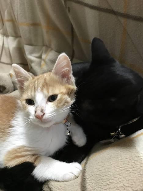 猫に関する質問