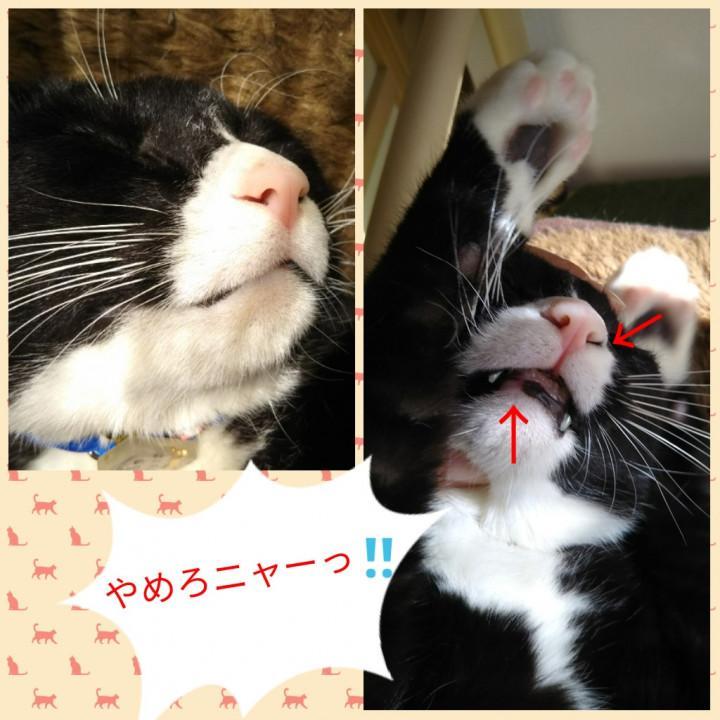 黒い が 猫 鼻くそ