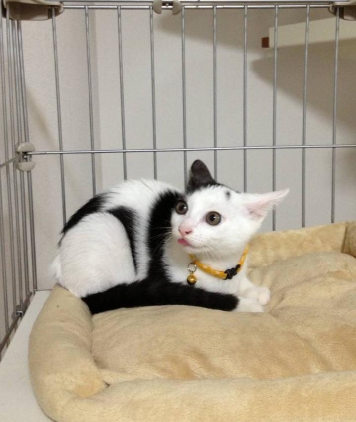 笑わせるネコ~変な顔~ , matchaさんの猫ブログ , ネコジルシ