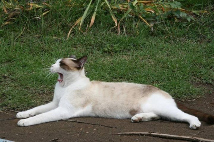 スノーシュー ♪ , 白猫ゾッチャさんの猫ブログ , ネコジルシ