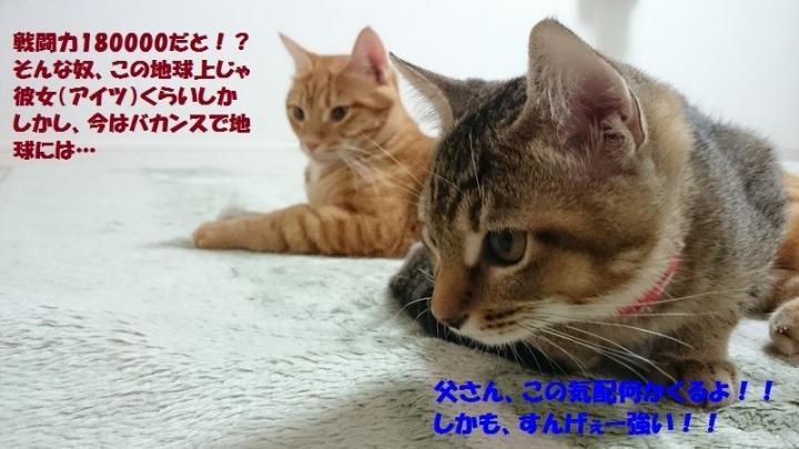 にゃおゴンボール - bibiriさんの猫ブログ - ネコジルシ