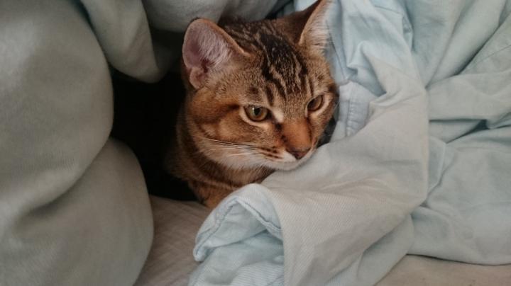 祝!!5か月 そしてシローネが - bibiriさんの猫ブログ - ネコジルシ