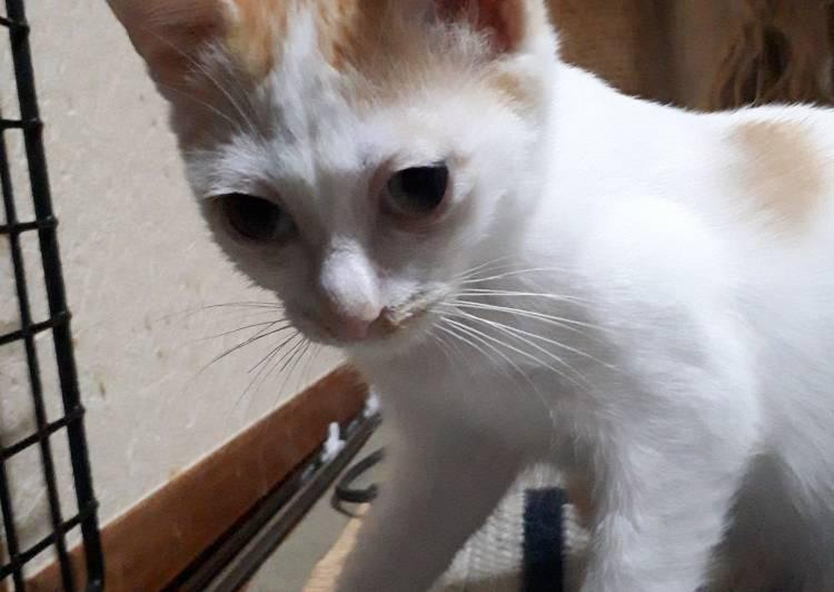 石川 保護 県 猫