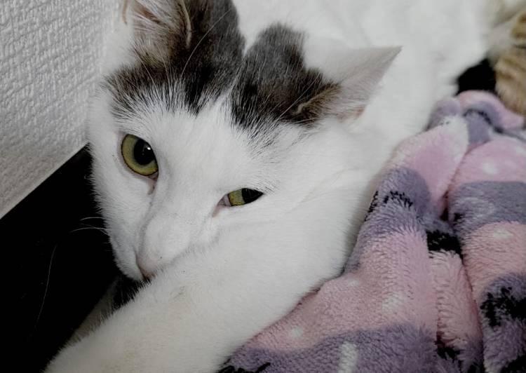 里親 横浜 猫
