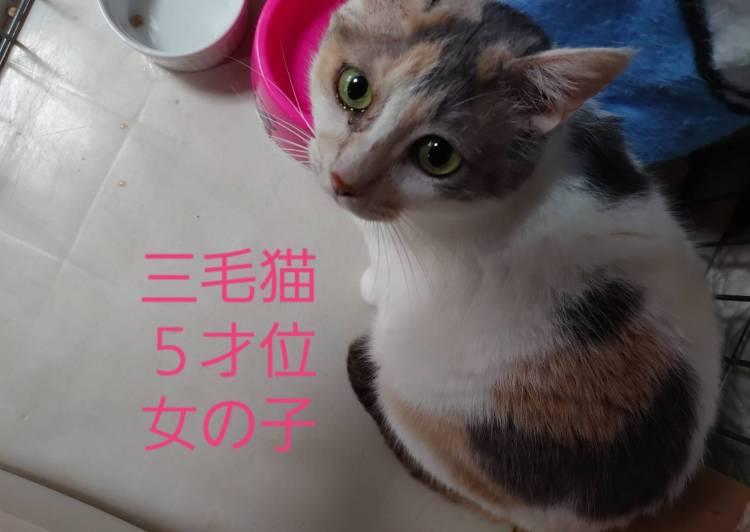 里親 猫 石川 県 石川県 加賀市の猫の里親募集 ジモティー