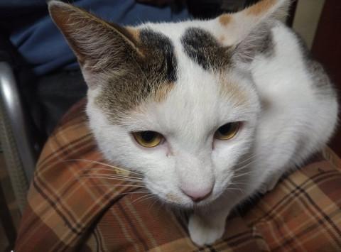 長野県 猫が多い