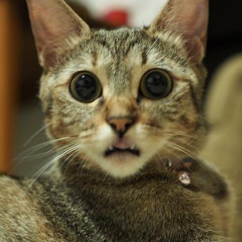 面白い顔💕 , かわいい猫写真\u0026猫画像の投稿サイト , ネコジルシ